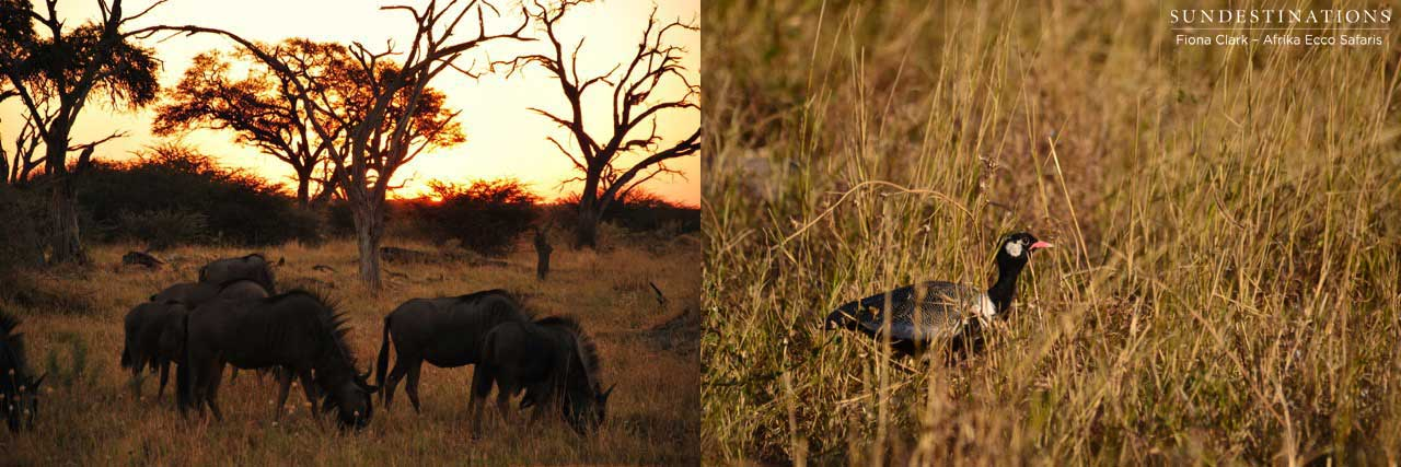 Guest blog: An Afrika Ecco Safaris Adventure
