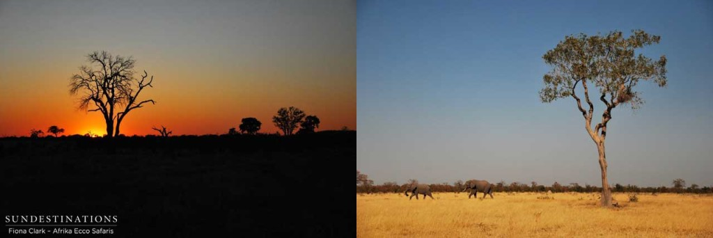 A Savuti sunset and elephants on the horizon
