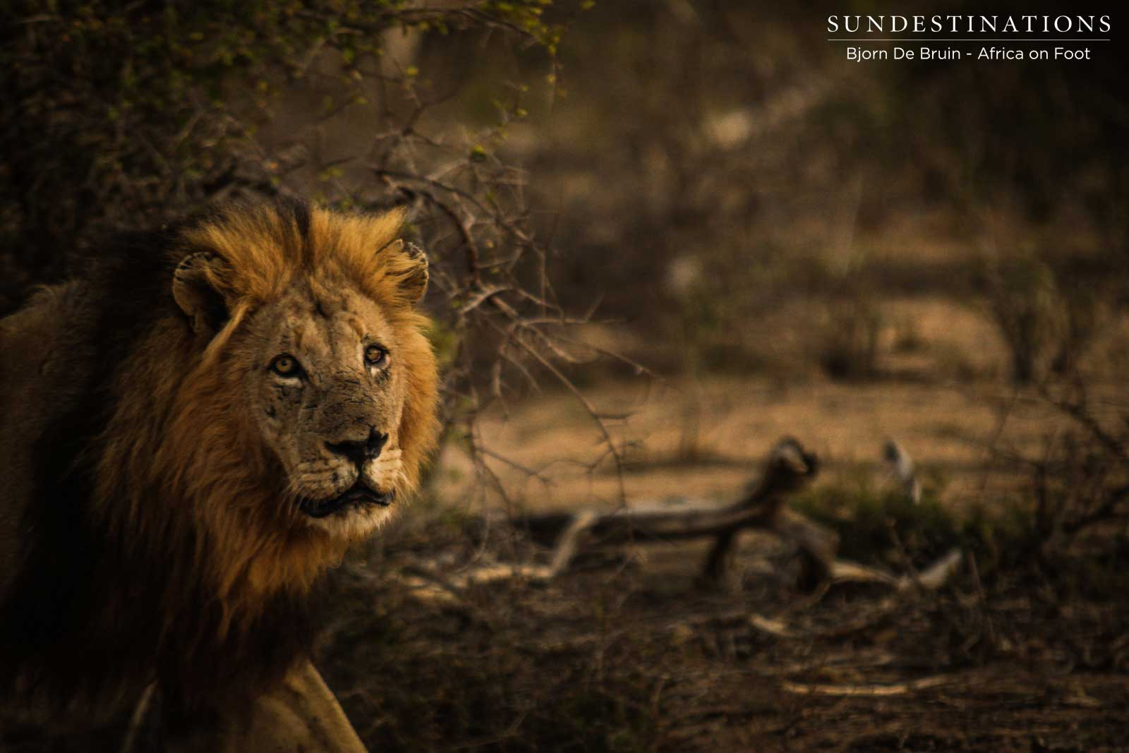 Week in Pictures: A Safari Smorgasbord