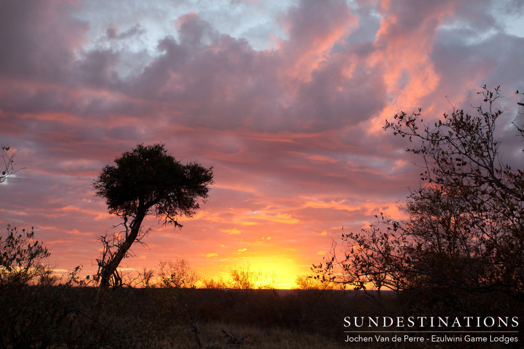 A final flare of magnificence to compete a perfect day on safari