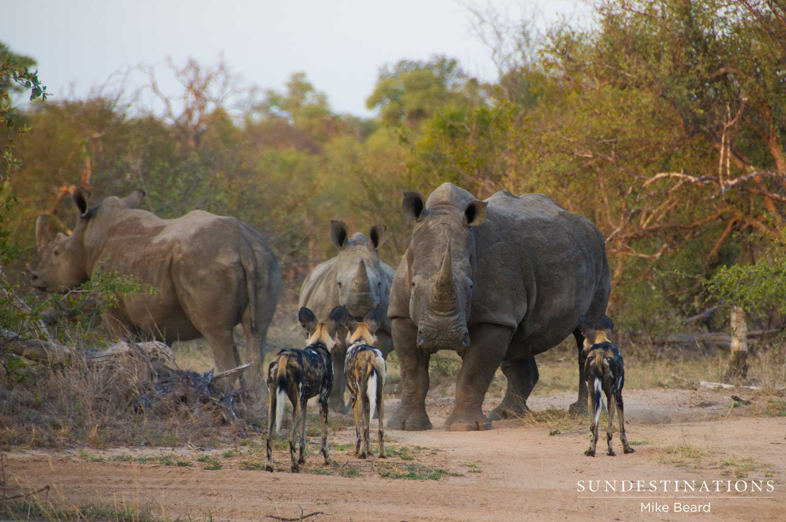 World Rhino Day 2016: Our Modern Day Dinosaurs