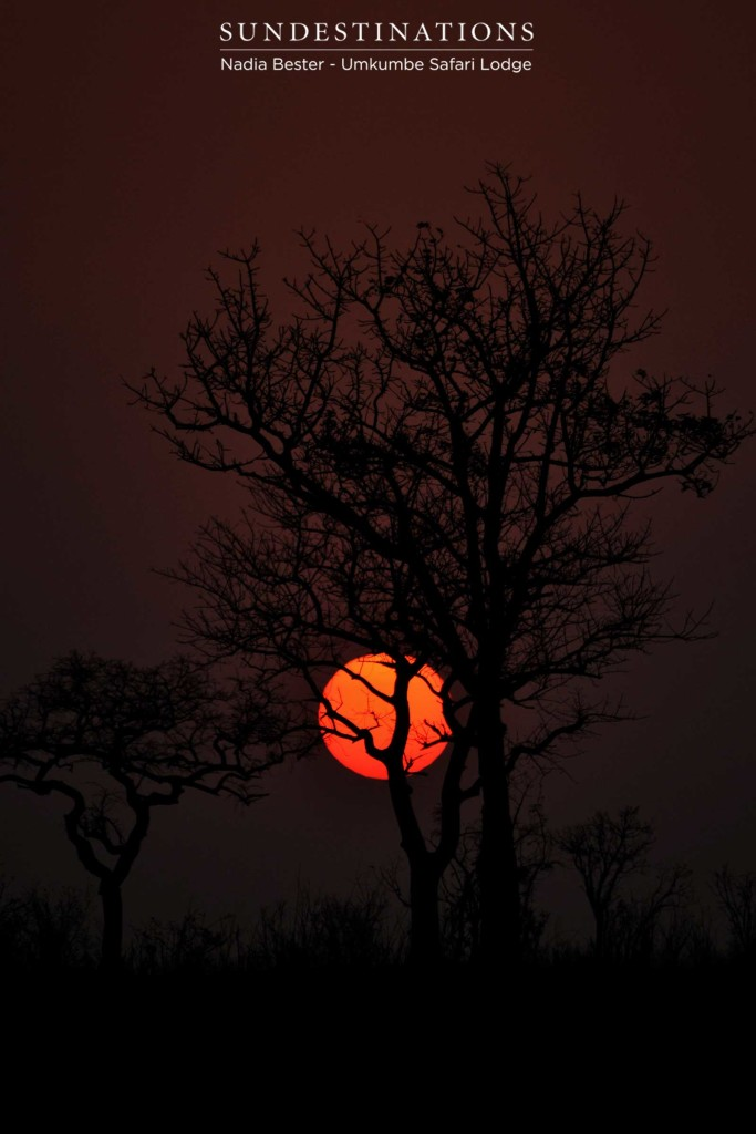 The burning ring of fire glowing brightly in the darkening sky, announcing the end of another day in Africa