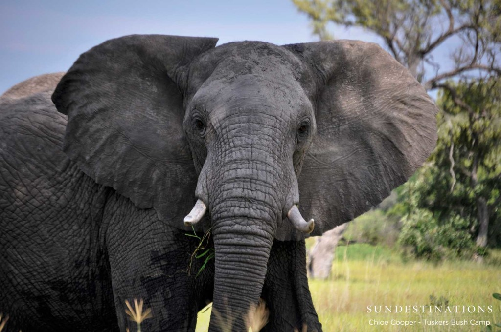 An elephant looks surprised to see us as it ambles through its vast and wild kingdom