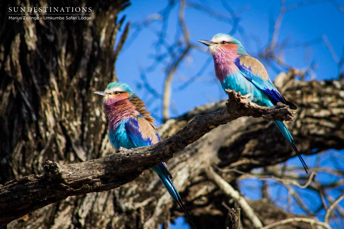 Kruger Birding Checklist : Facts and Feathers