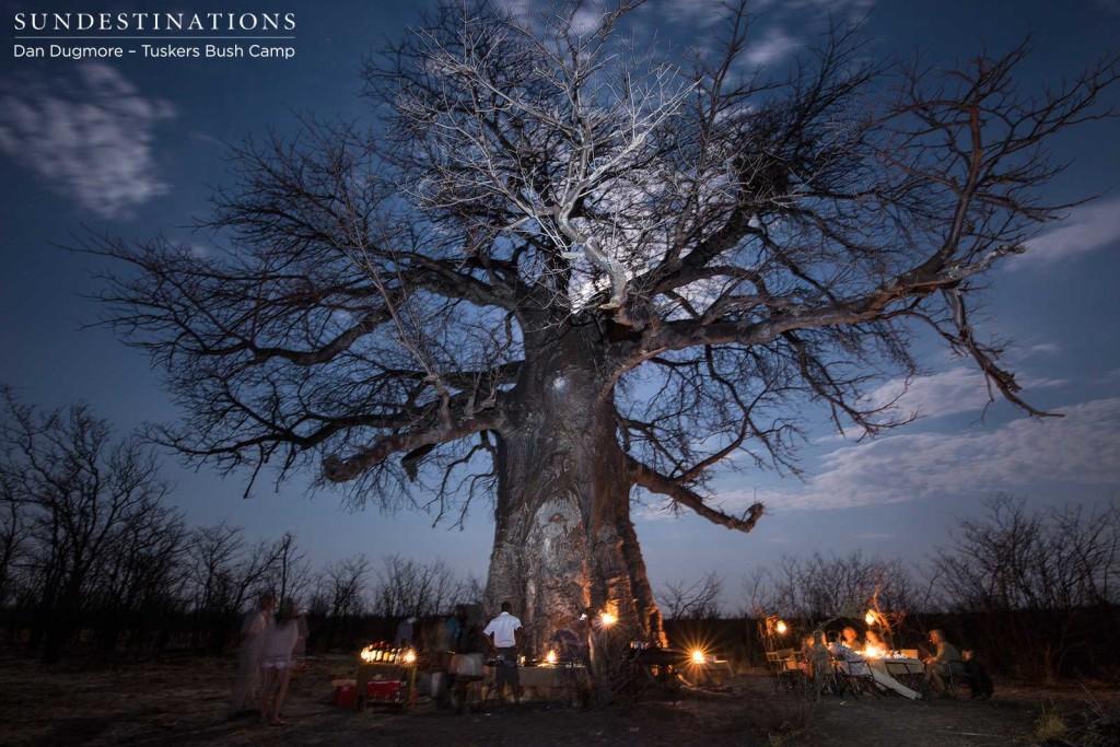 Baobab bush dinner at Tuskers Bush Camp