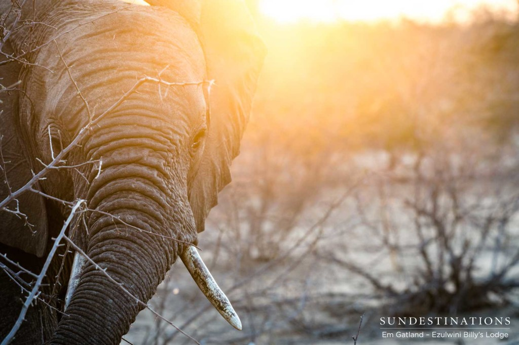 Spotlit in sunlight, an elephant basks in the rays of the rising sun