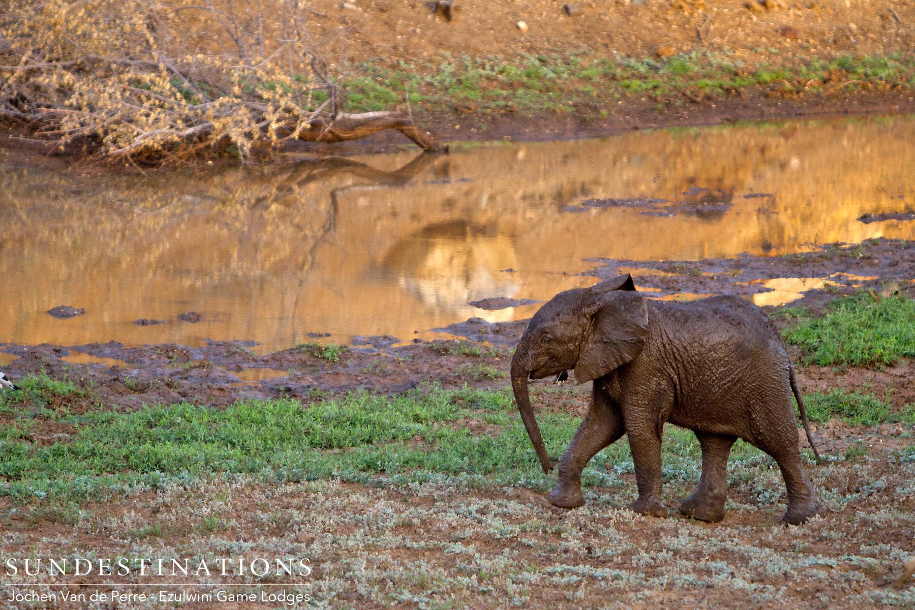 Week in Pics : Felidae Family Dominate Our Sightings