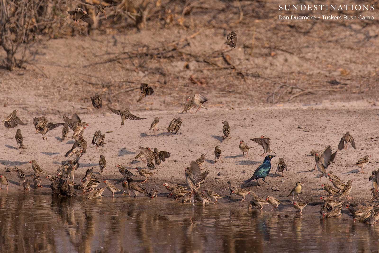 Tuskers Birding Checklist: Special Features!