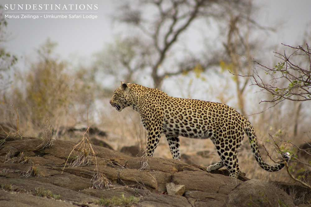 5 Leopards to See at Umkumbe Safari Lodge