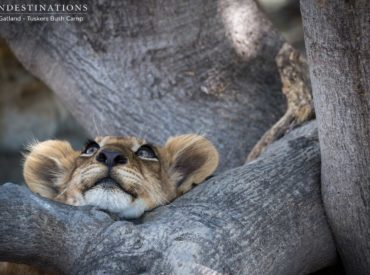 First of all, happy Friday one and all! It's already a good day, and can only be made better by this long list of some of the best wildlife photography to come out of our Kruger and Botswana safari lodges this week. It's been a cracker all round, with predator sightings from top to bottom, […]