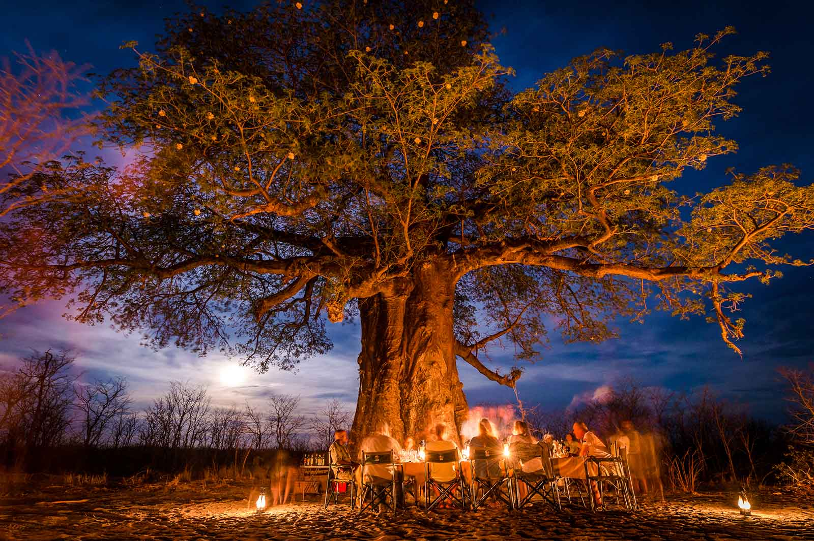 Special baobab bush dinner under a flowering baobab tree in the Kwatale Conservancy