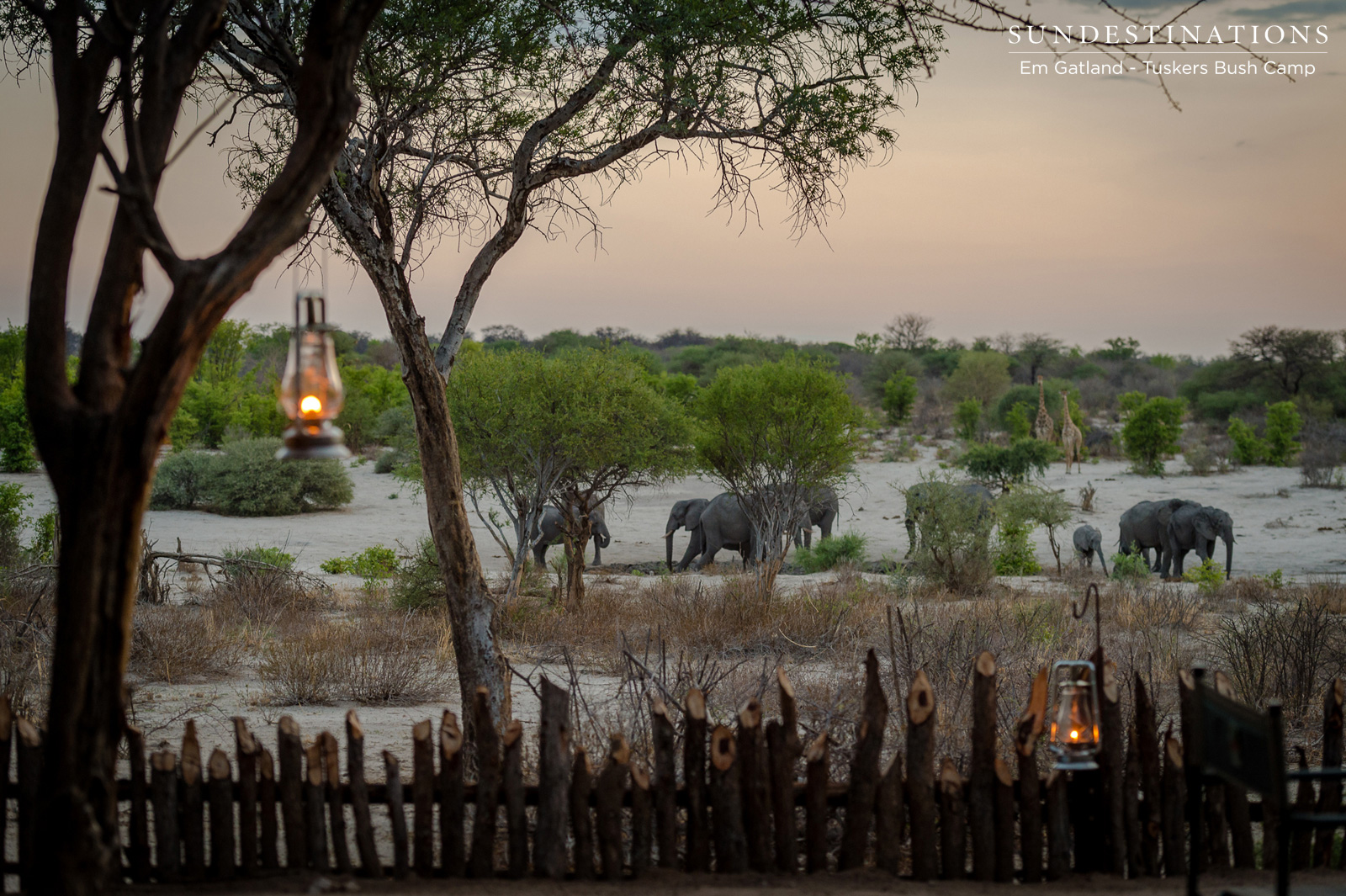 Tuskers Bush Camp Elephants