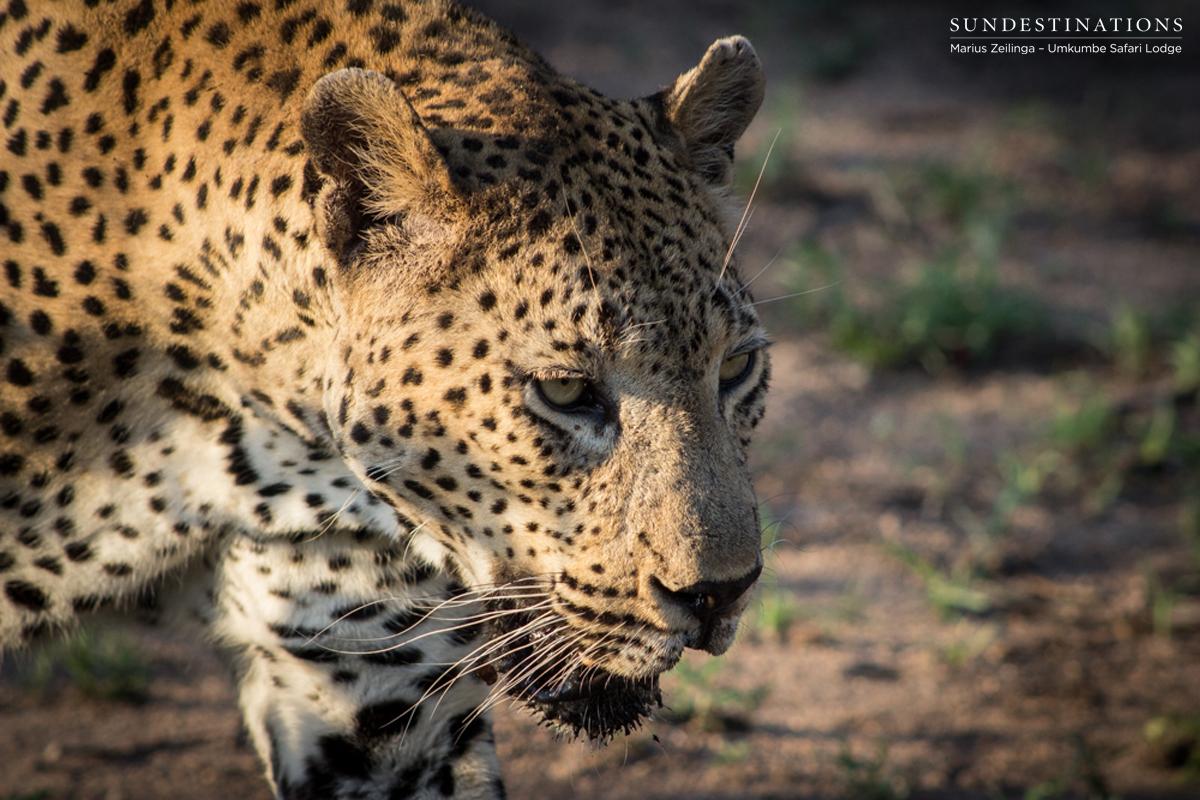 Week in Pictures : Bushveld Peace Amidst Festive Mayhem