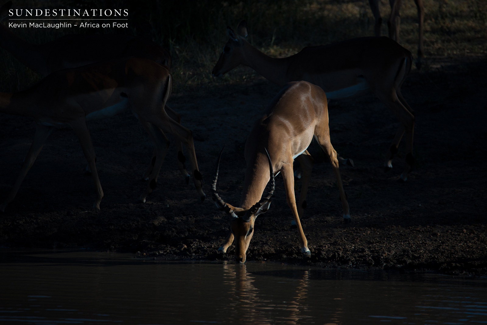 Africa on Foot Impala