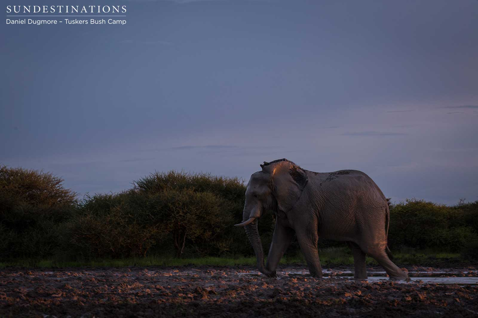 Week in Pictures: Safari Stars