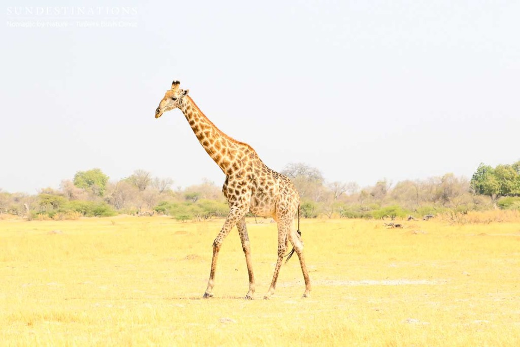 Moremi Game Reserve Self Drive from Tuskers Bush Camp