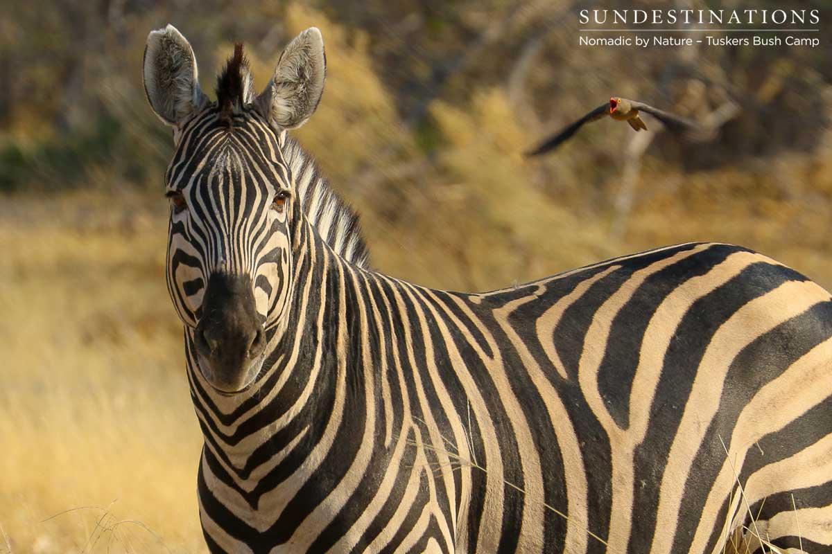 The Sensory Experience of a Walking Safari at Tuskers