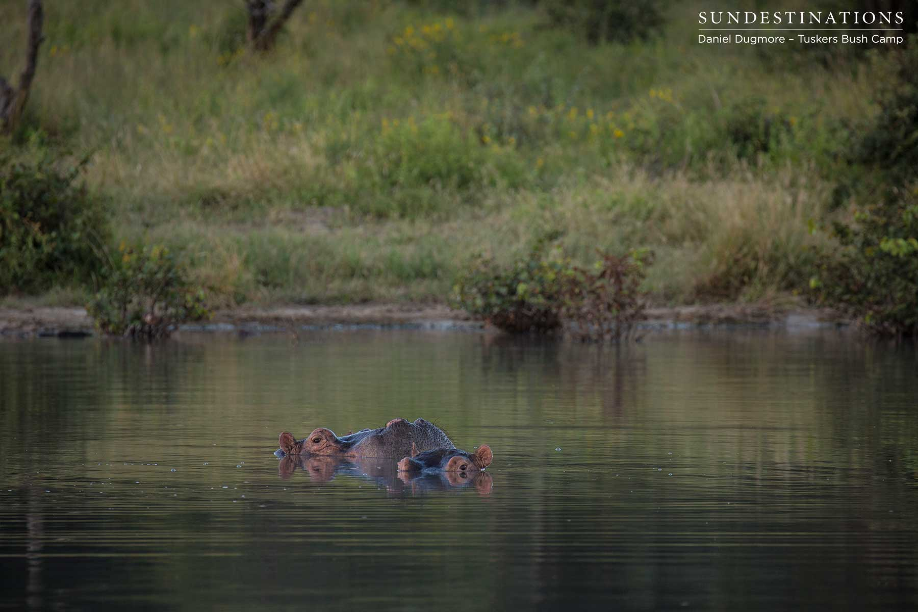 Hippo at Tuskers