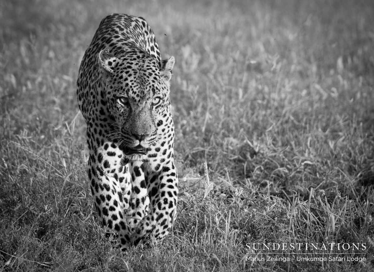 Umkumbe Leopard News : Dashing and Daring, Courageous and Caring…
