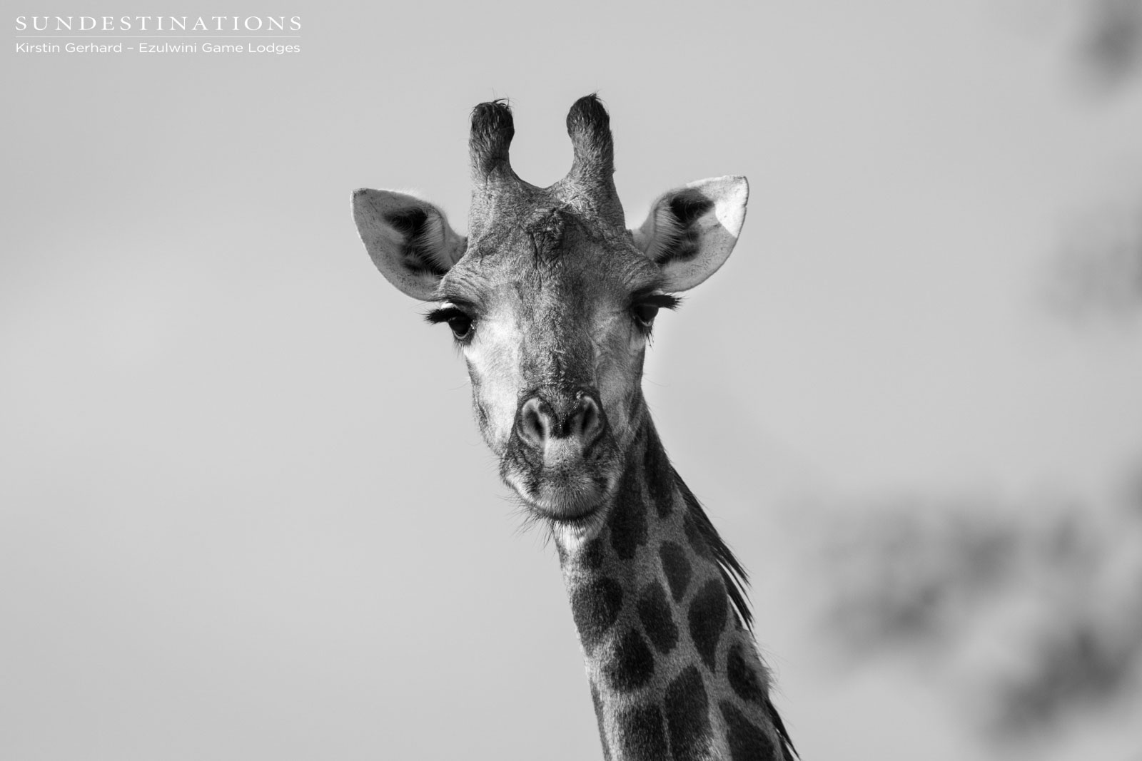 Giraffe at Ezulwini Game Lodges