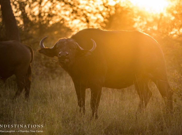 Top Safari Sightings at Africa on Foot and nThambo