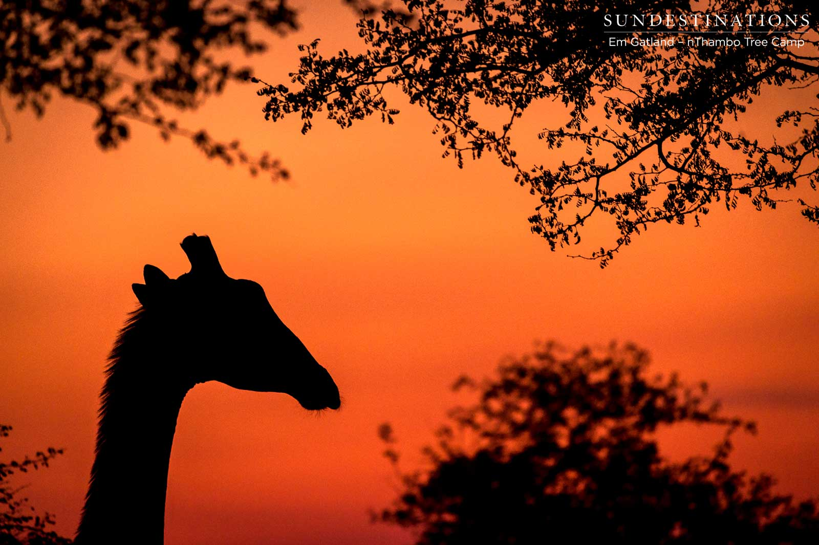 Game Viewing in the Soft Light of the Klaserie Bushveld