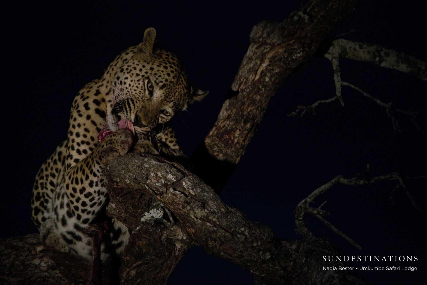 Mxabene Eating Kill - Night
