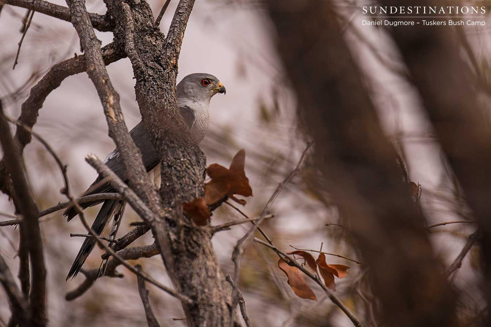 Twitchers Be Crazy! Birding in Botswana Has Never Been Better