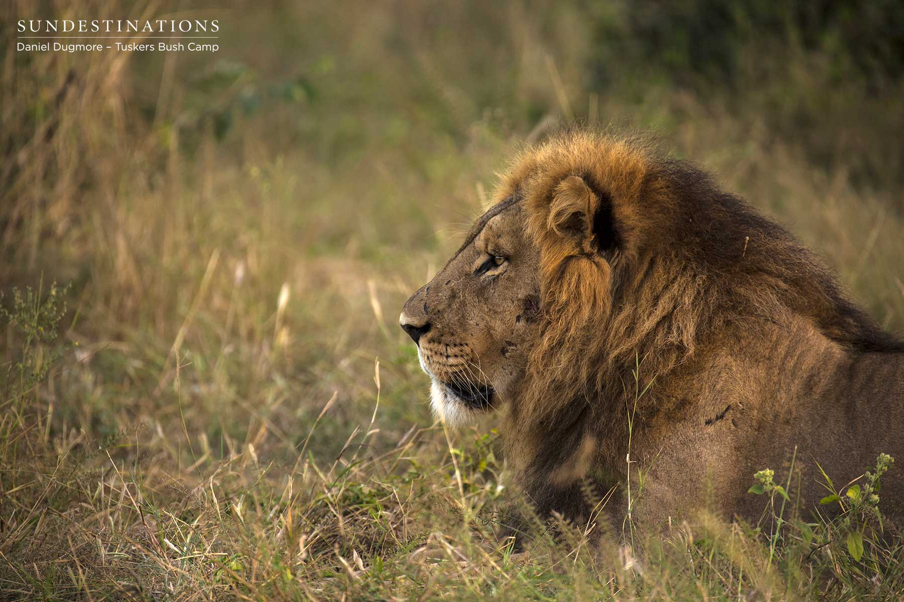 Powerful Male from Kwatale Concession