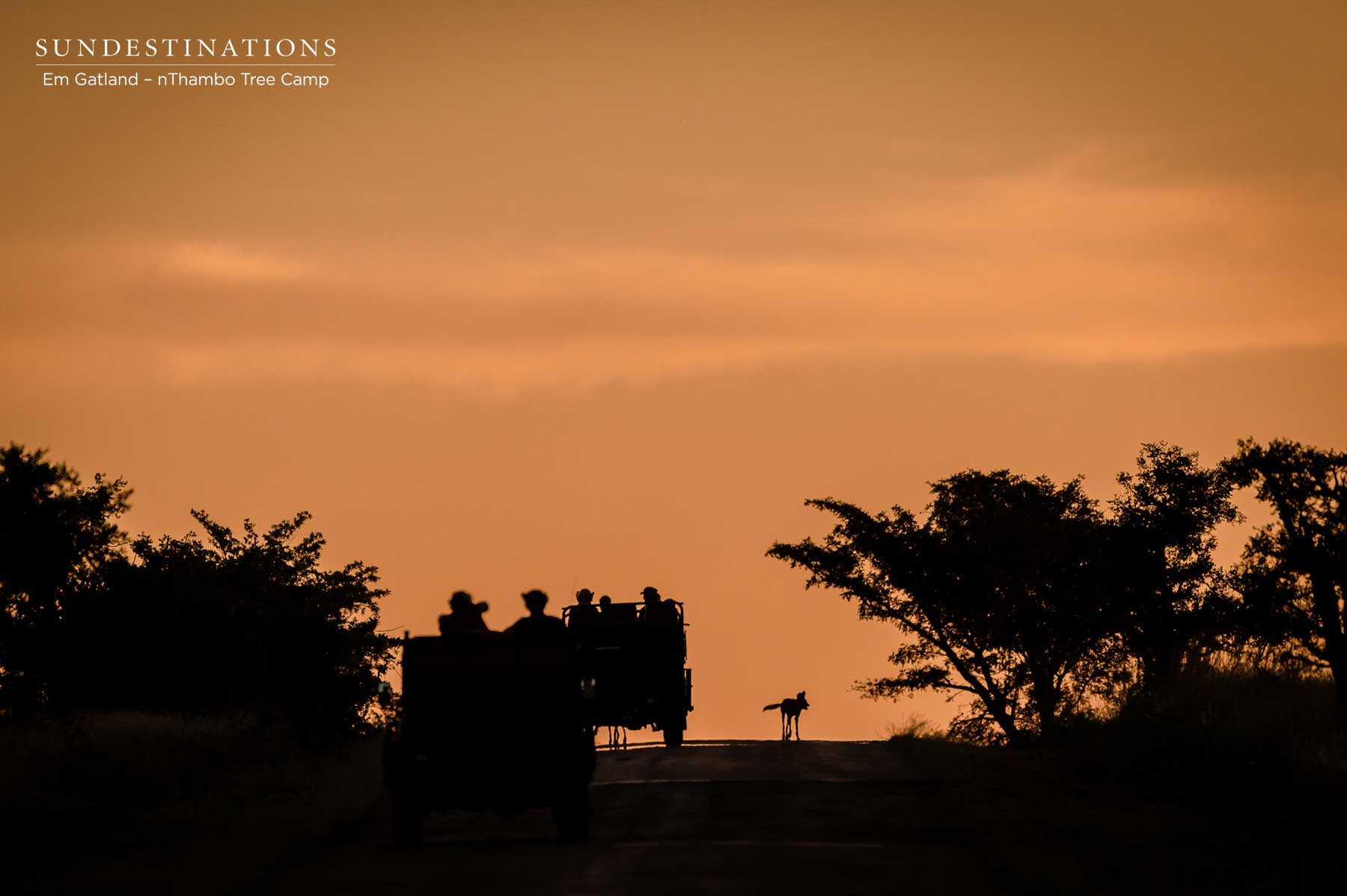 African Wild Dogs at Sunset