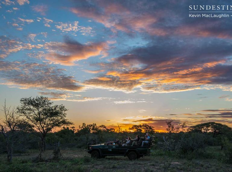 Bovids, Pachyderms and the Beauty of the Bushveld