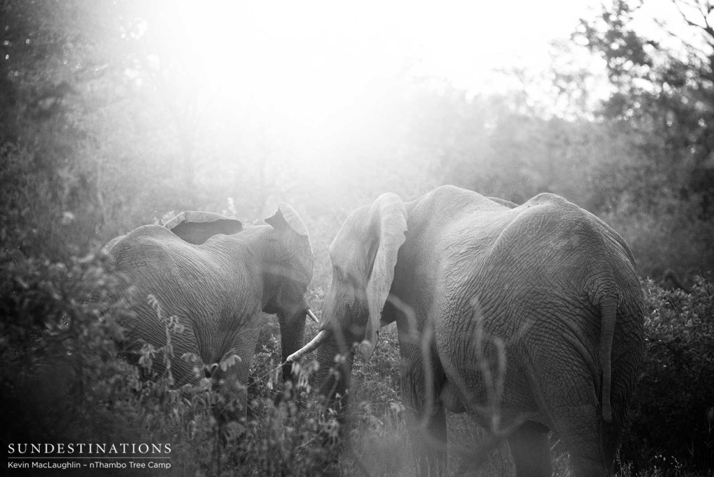 A meeting among friends in the secret alleys of the bushveld