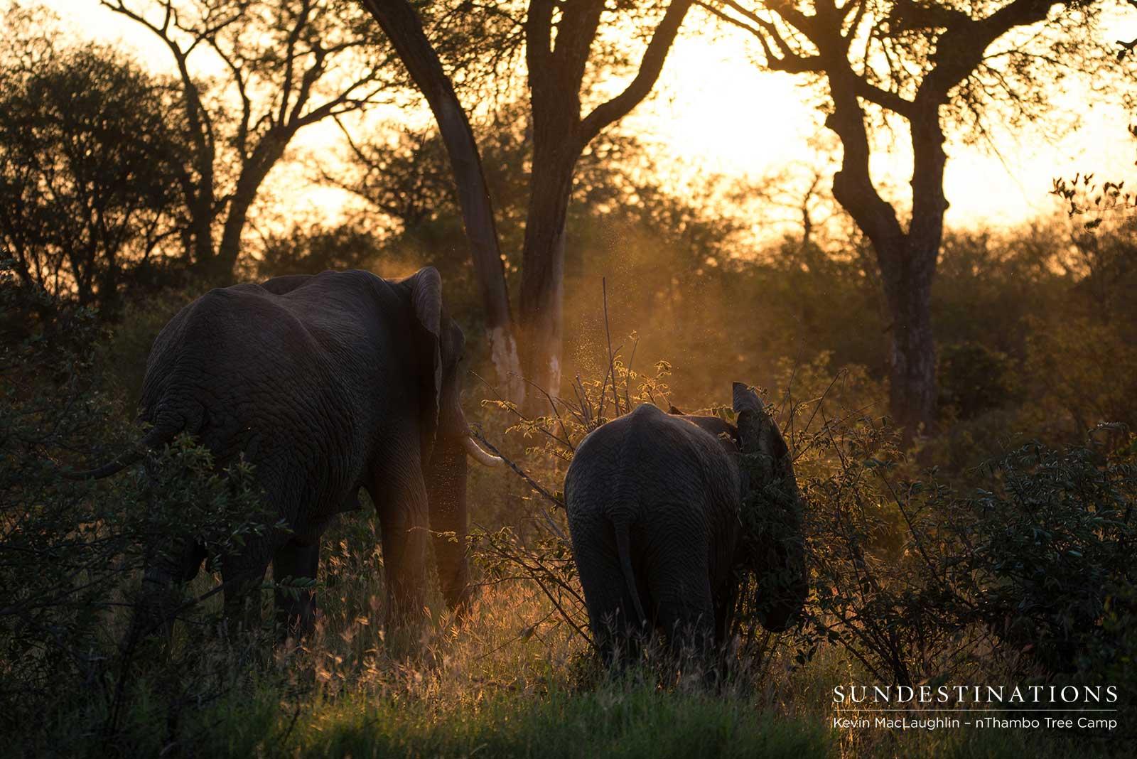 Elephant Herd - Sunset