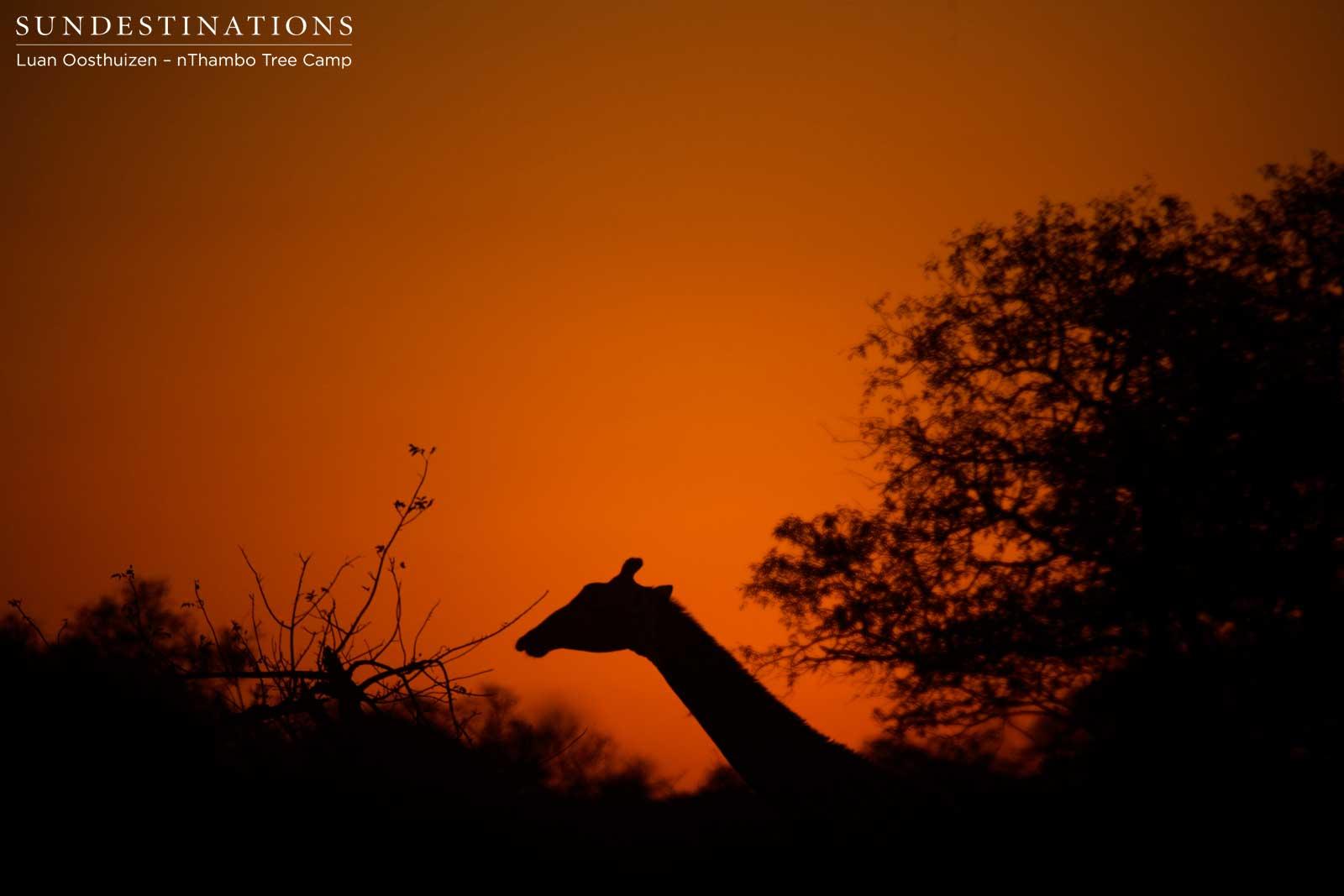 A Kaleidoscope of Colourful Skies While on Safari