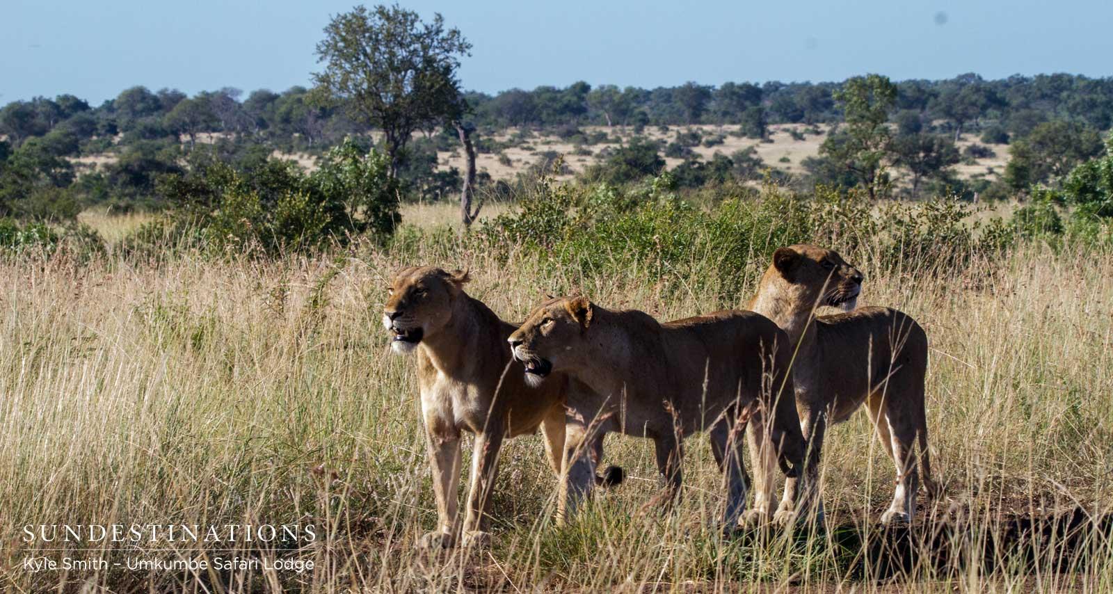 Mhangeni Breakaway Lionesses