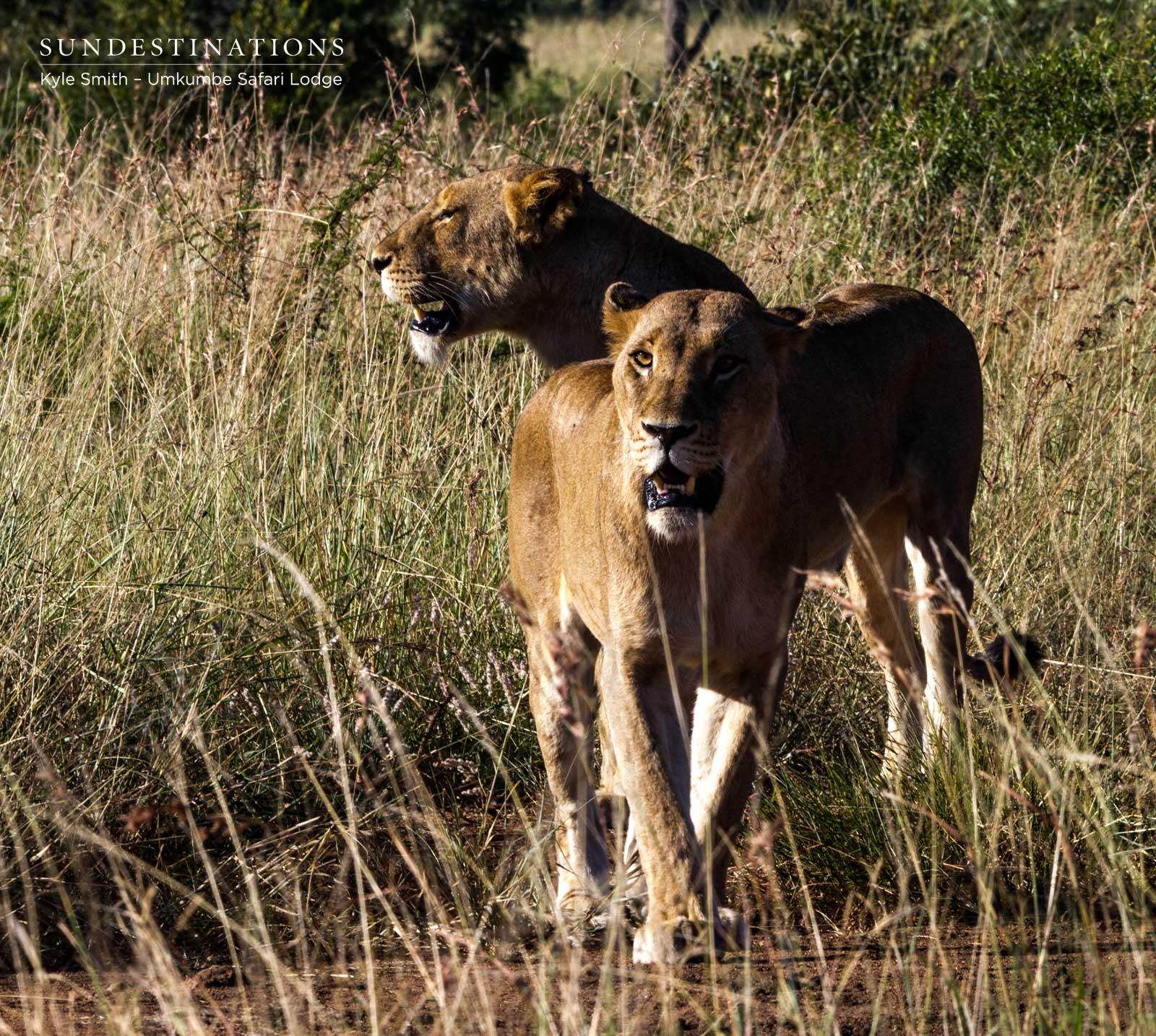 Mhangeni Females