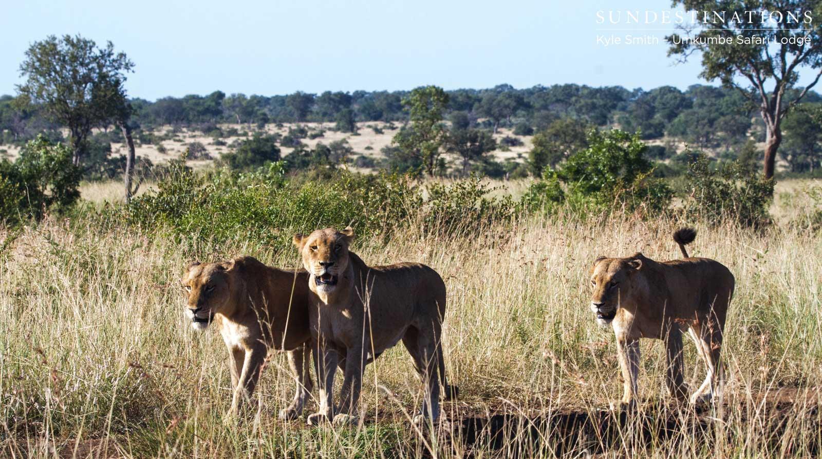 Mhangeni Lionesses