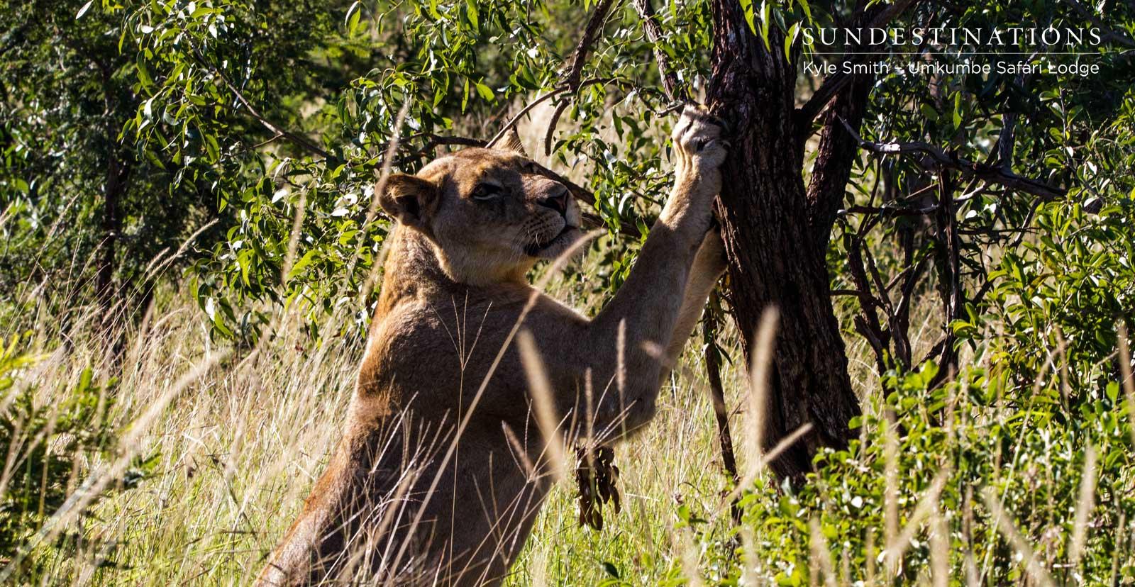 Mhangeni Lionesses on Patrol
