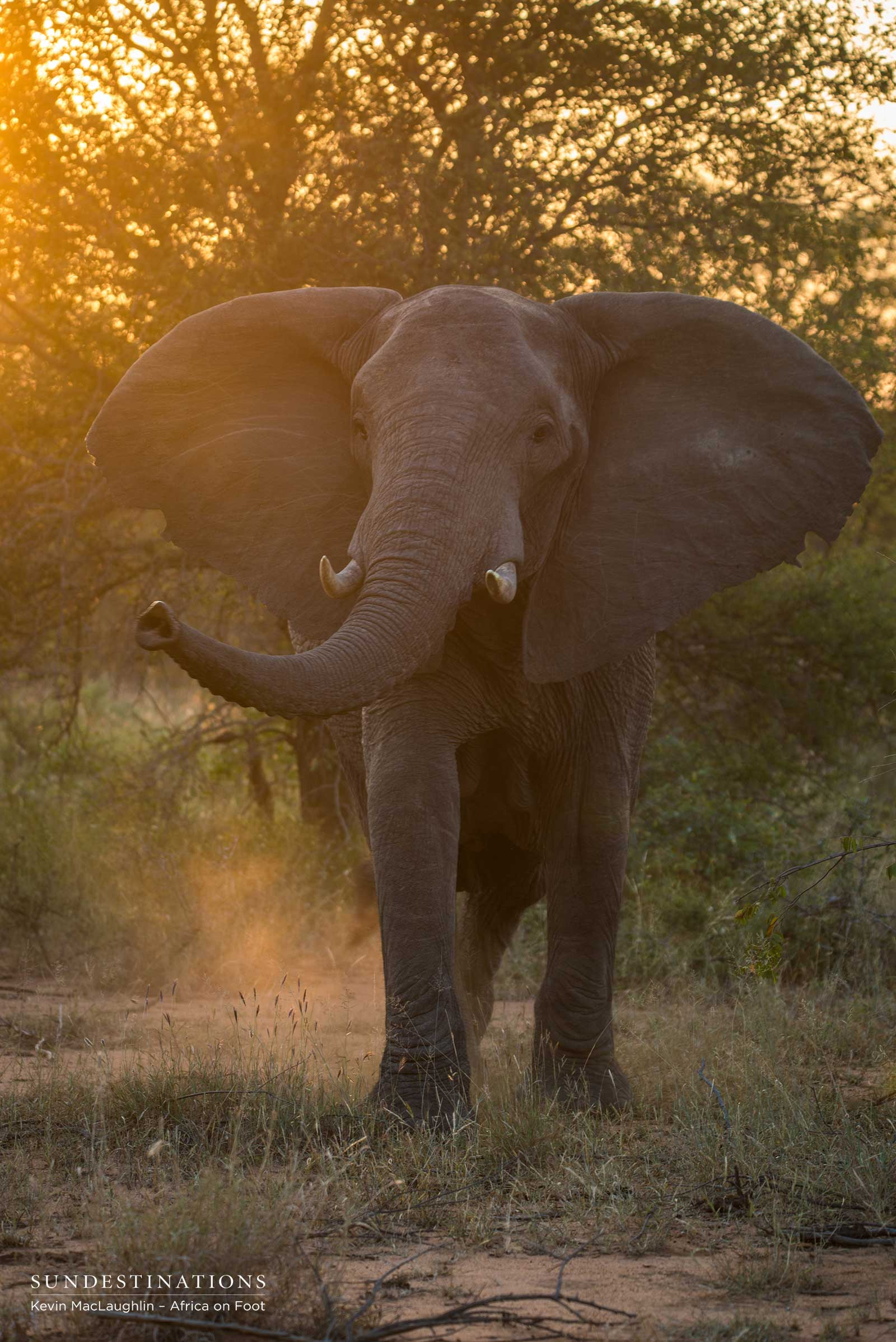 Elephant at Africa on Foot