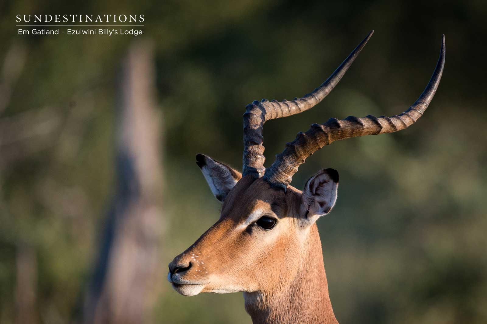 Impala Ezulwini Game Lodges