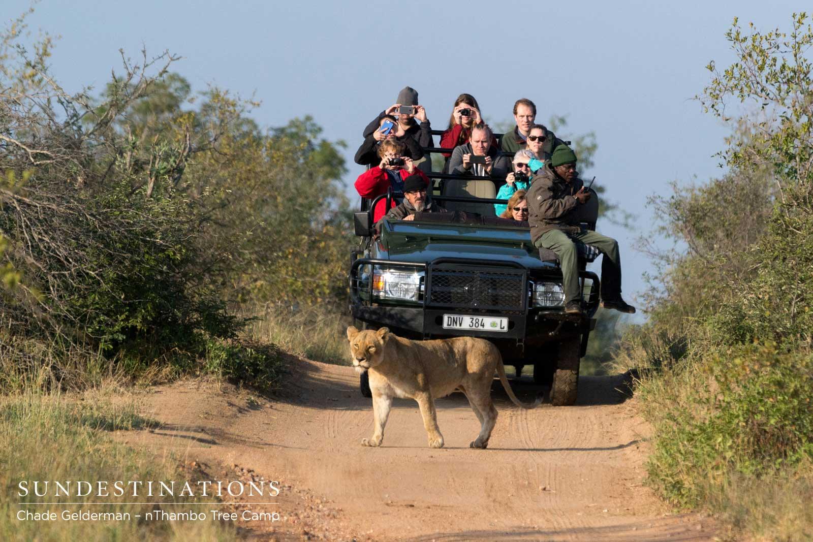 A Wild Life at nThambo Tree Camp