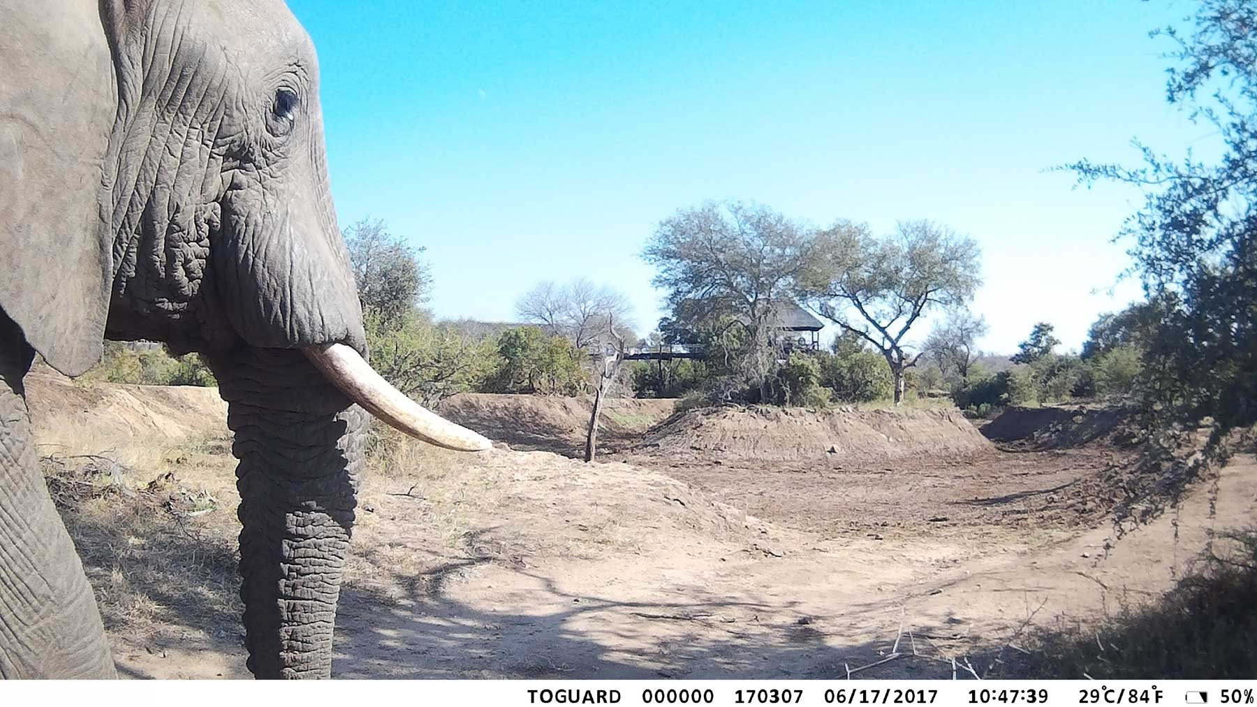 Ezulwini Elephants Camera Trap