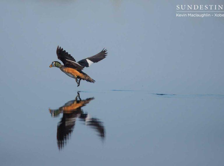 Recent Bird Sightings while Cruising the Okavango Delta