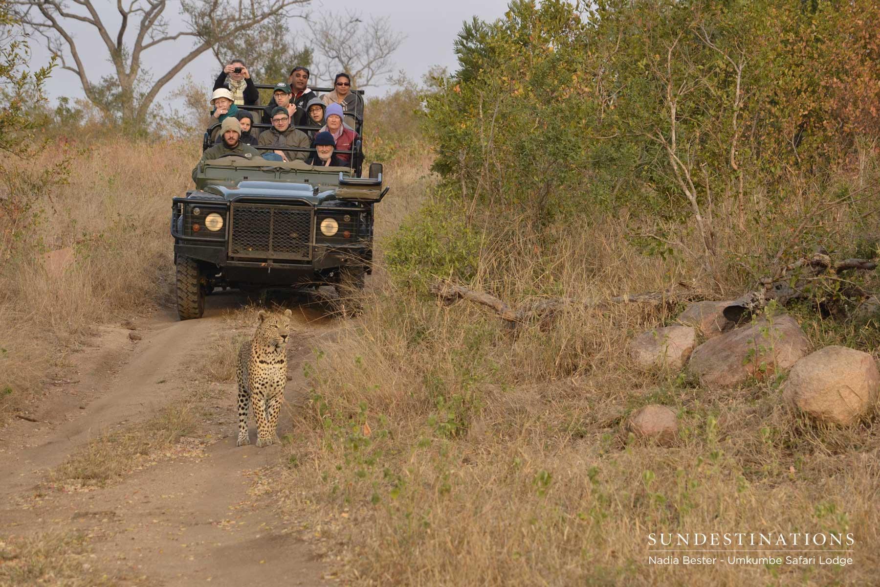 Umkumbe Leopard Update : Mxabene Devours a Pile of Scat