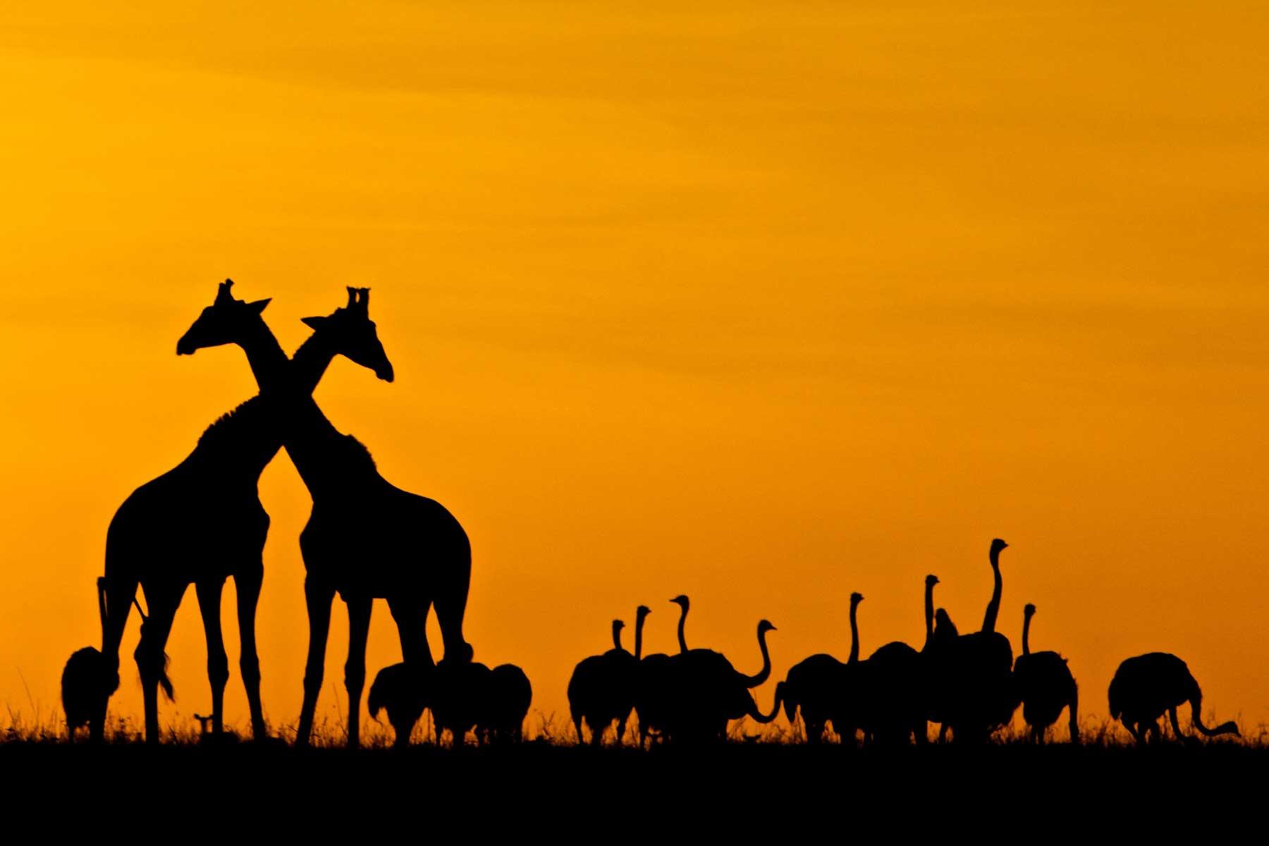 Warren Samuels: Naturalist, documentary cameraman, and guide extraordinaire