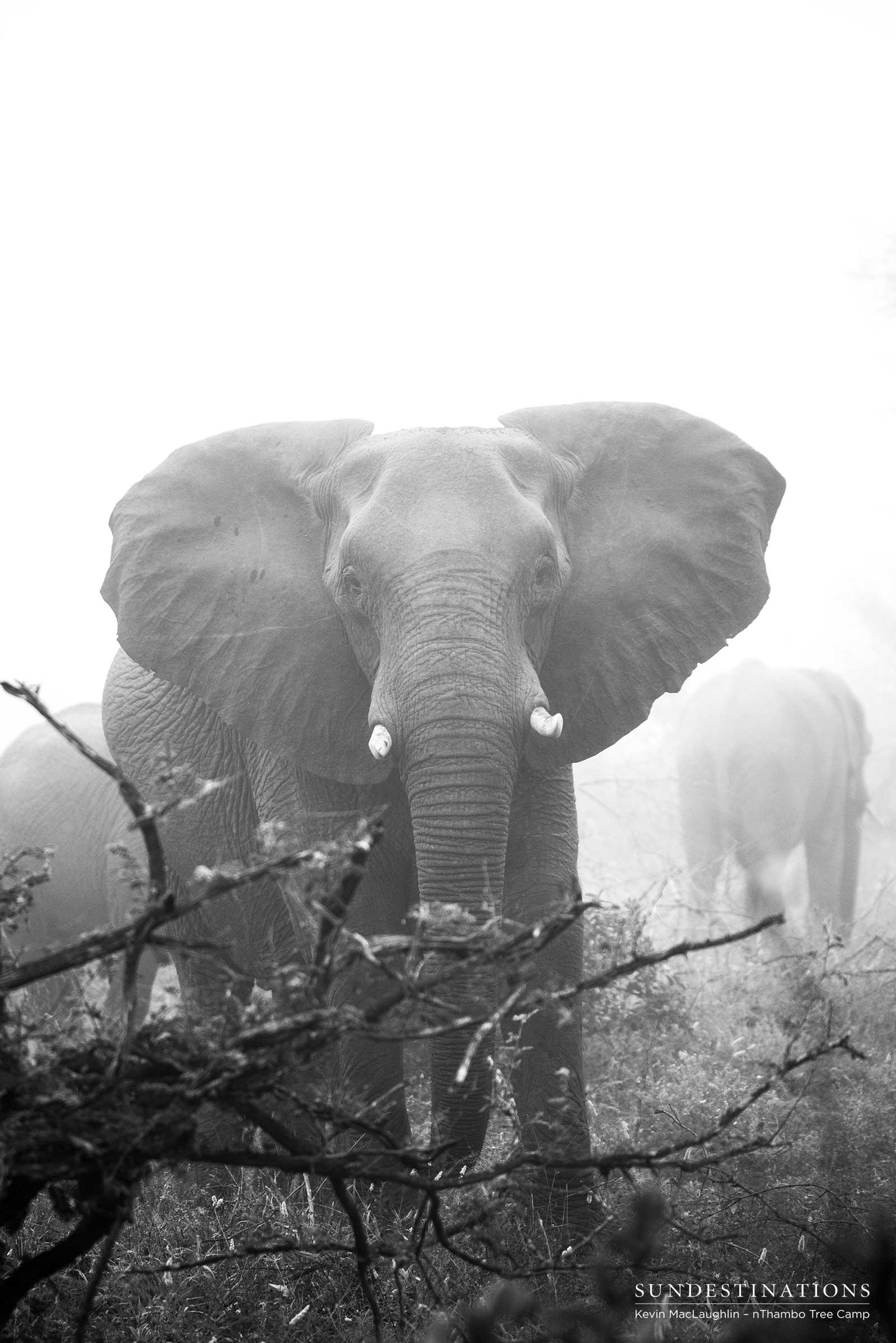 elephant nThambo