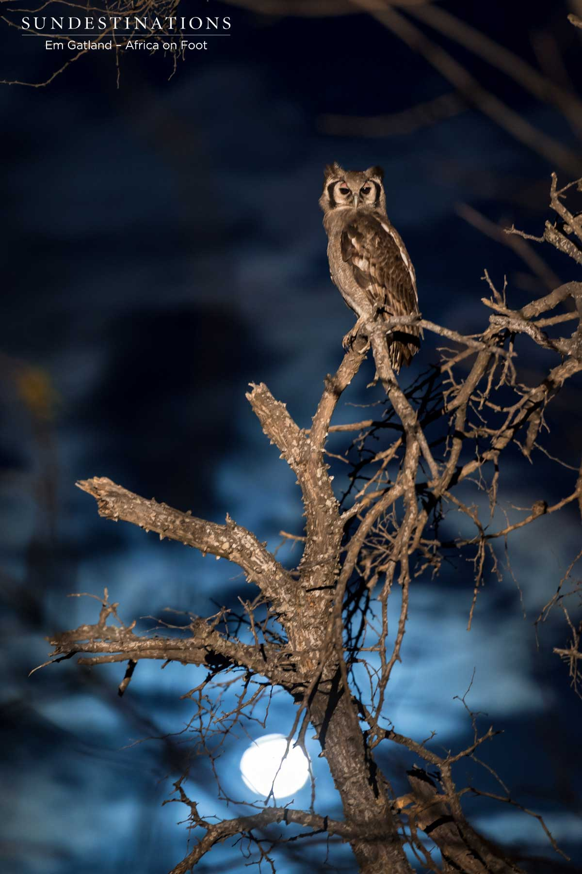 Owl Africa on Foot