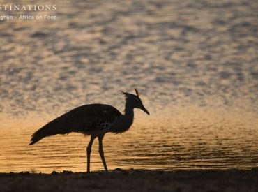 As fast astumbleweed in the desert, the weeks seem to be rolling by. Soon we will be caught up the flurry of the festive season, which is why we take time to pause and reflecton Fridays. Friday is the day when we celebrate the sightings of the week and showcase our top images from each […]
