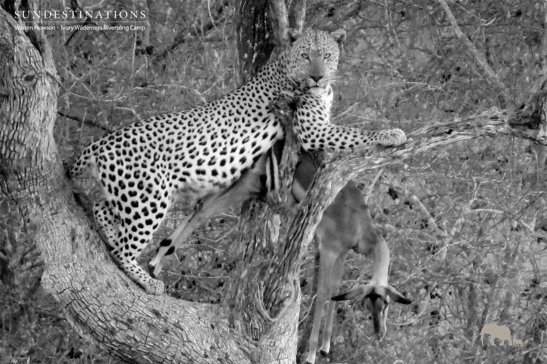 Warren's Weekly Wildlife Mix : Leopard in Front of Camp