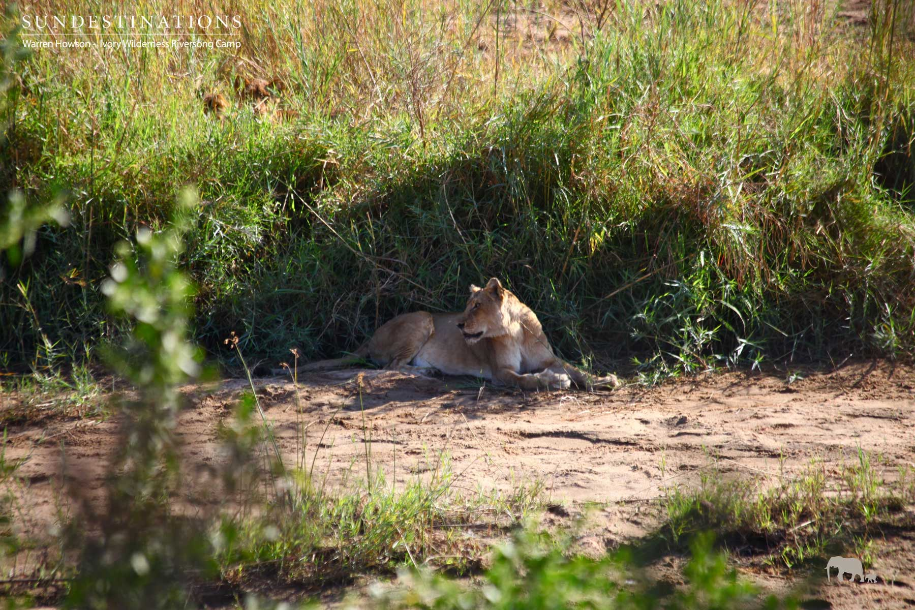 Warren's Weekly Wildlife Mix : Wild Dog Pups, Leopards and Lions